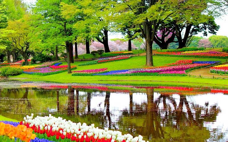 কোকেনহাফ বা কিচেন গার্ডেন বিশ্বের বিখ্যাত ৫টি ফুলের বাগান