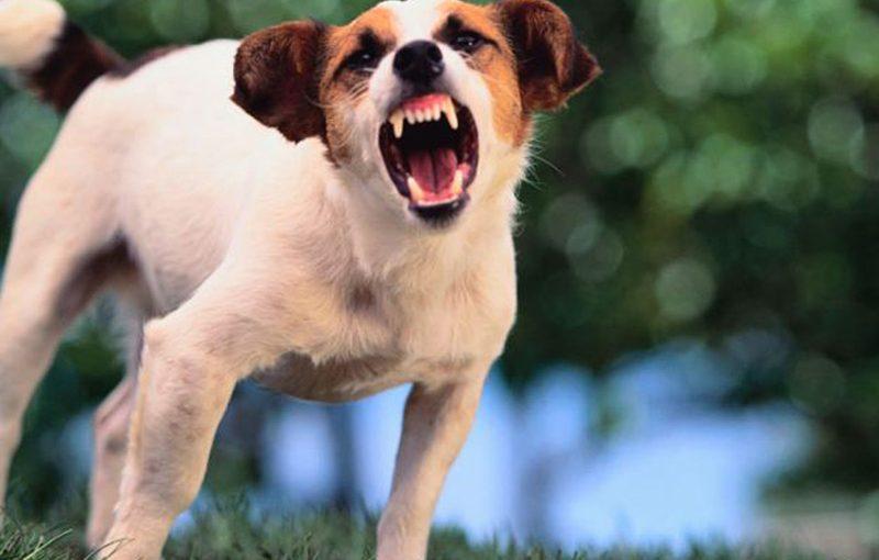 1st-aid-for-dog-bite