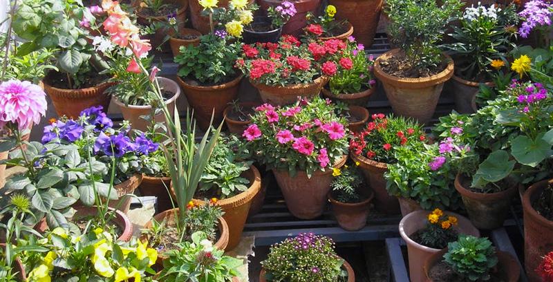rooftop-flower-garden