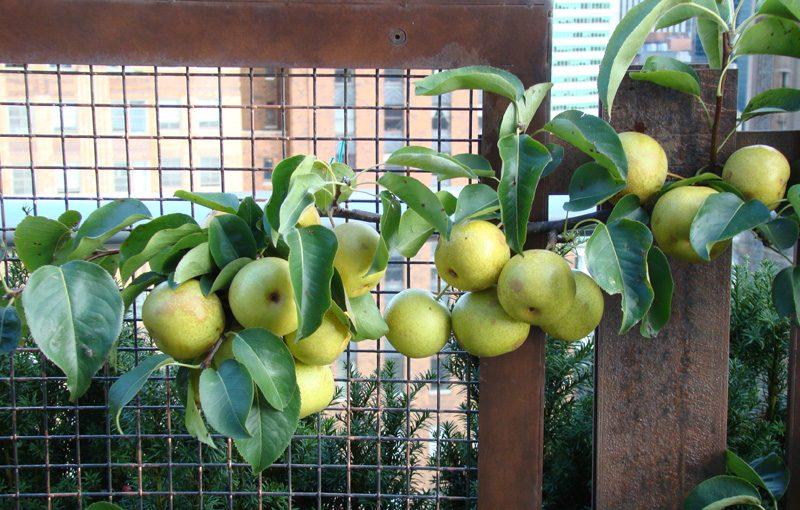 rooftop-fruits-garden